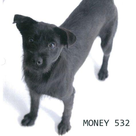 532-Money
