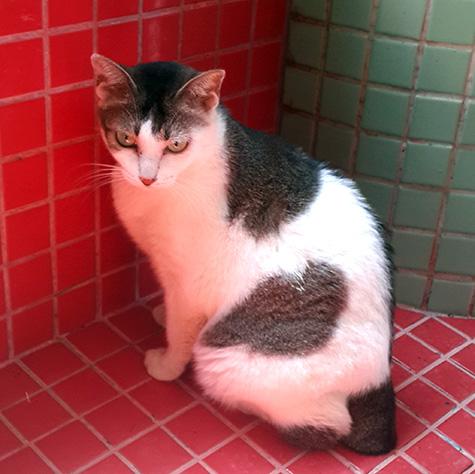 CAT_C103_Mina