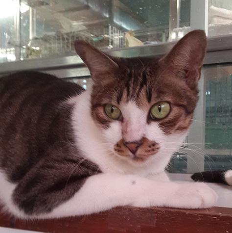 CAT_C105_Happy
