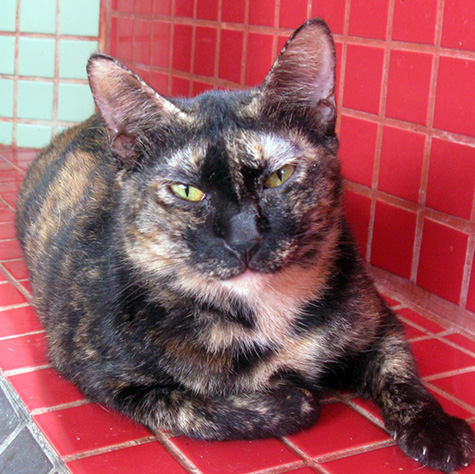 CAT_C250_Black_Pearl