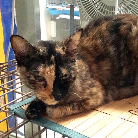 CAT_C307_Blacknose