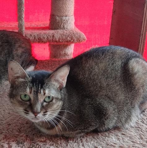 CAT_C337_Melina