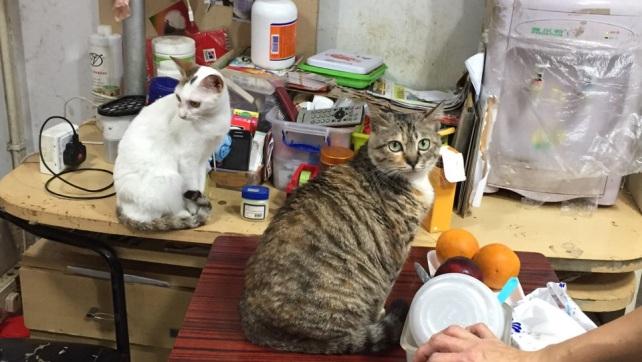 Over 50 cats in Estr. Da Bela Vista (3)