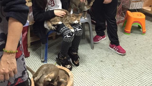 Over 50 cats in Estr. Da Bela Vista (4)