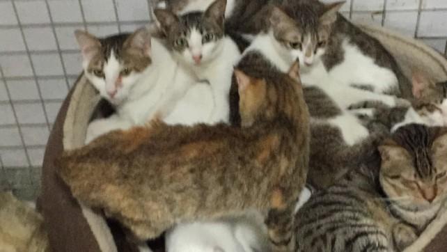 Over 50 cats in Estr. Da Bela Vista (7)