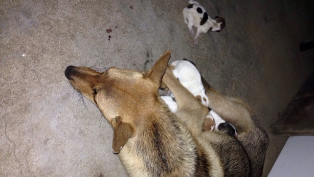 A dog was giving birth to 6 puppies in Boat Area