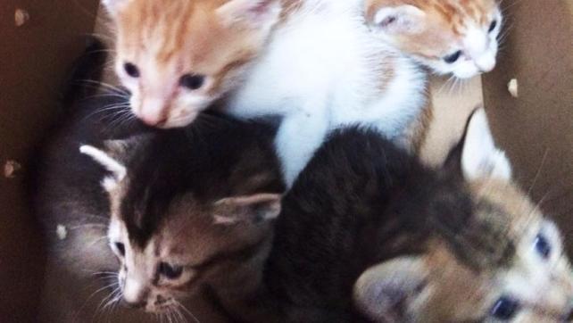 Ada-4 kittens (2)