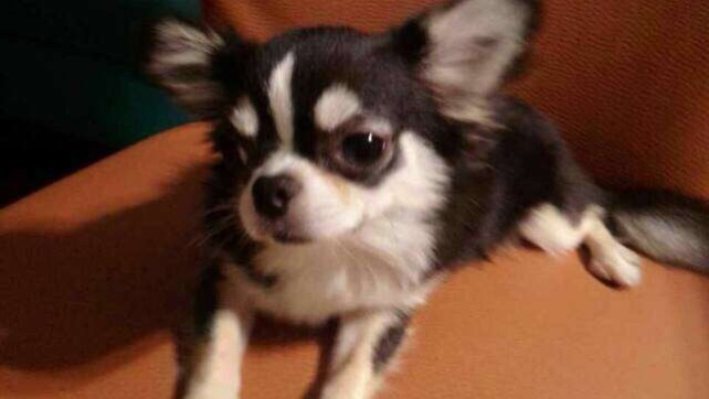DiDi post on Facebook for adoption (2)