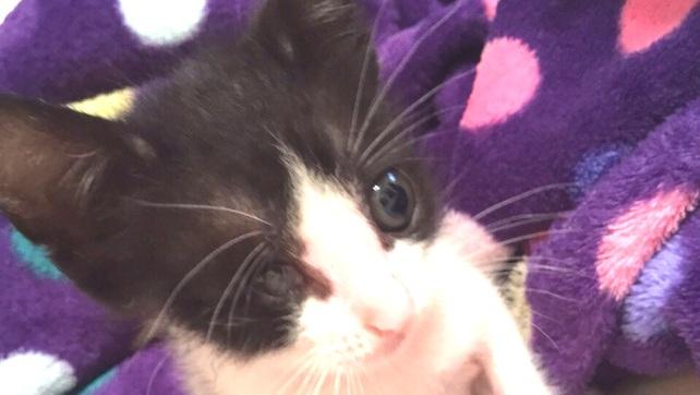 Kitten of Kitty of hac Sa beach (1)