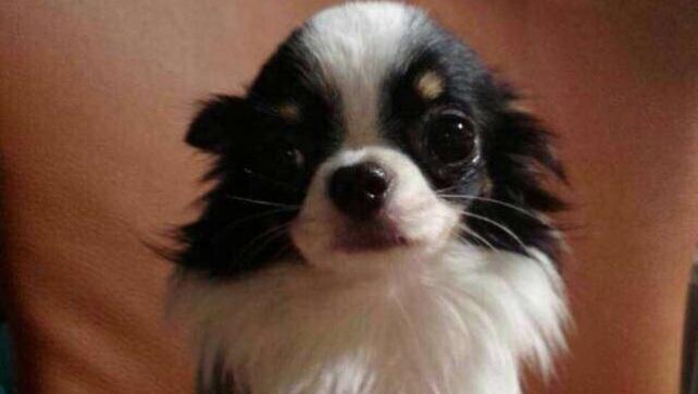 NaNa post on Facebook for adoption (2)
