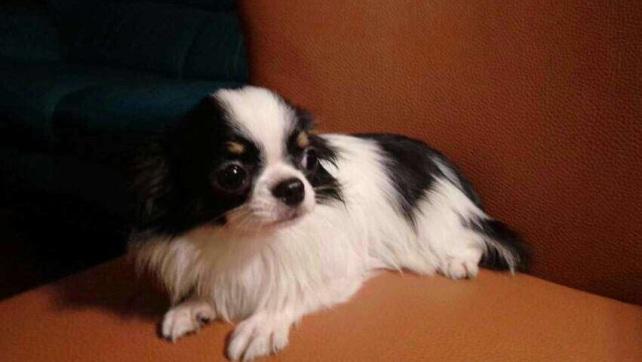 NaNa post on Facebook for adoption