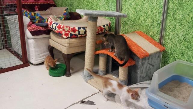 Kittens in B3 (11)