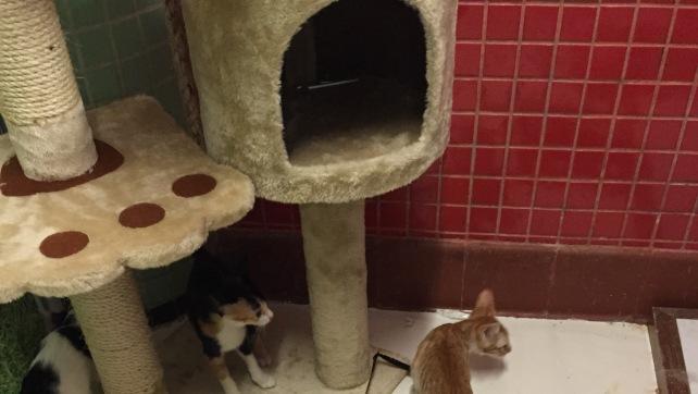 Kittens in B3 (3)