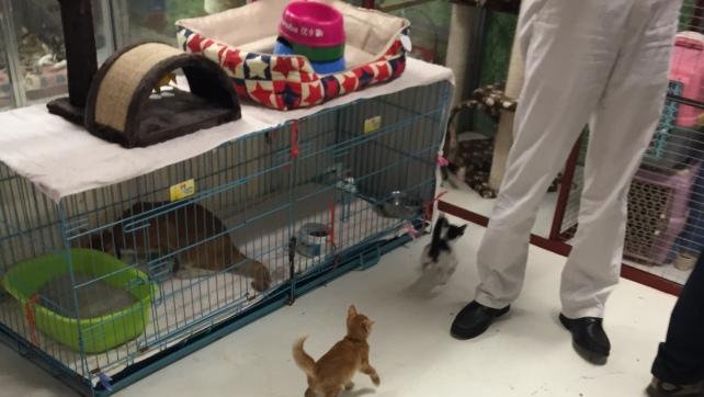 Kittens in B3 (4.1)