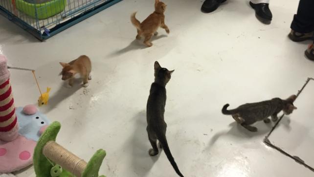 Kittens in B3 (4)
