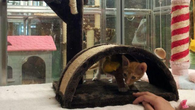 Kittens in B3 (9)