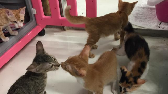 Kittens in B3