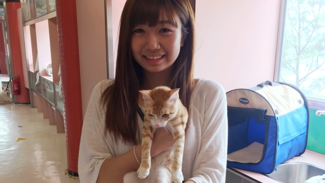 C970-Chanmi returned to the adopter after accommodation