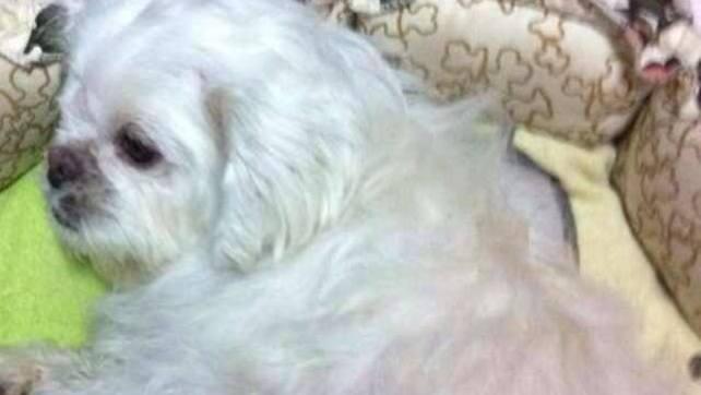 Mui Mui post on Facebook for adoption