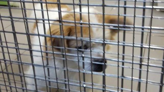 1519-Gugi at Hong Kong Airport Animal Hostel (2)