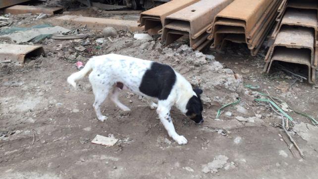 SPP1619-Hilda returned to Ka-Ho (3)