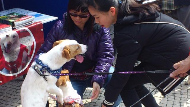 Taipa Dog Carnival-27-02-2016 (2)