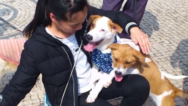 Taipa Dog Carnival-27-02-2016 (3)