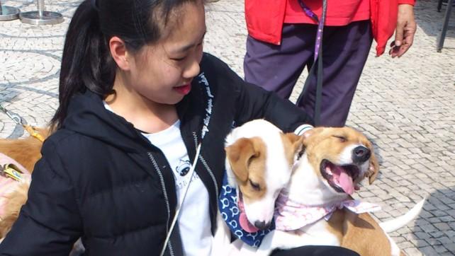 Taipa Dog Carnival-27-02-2016 (4)
