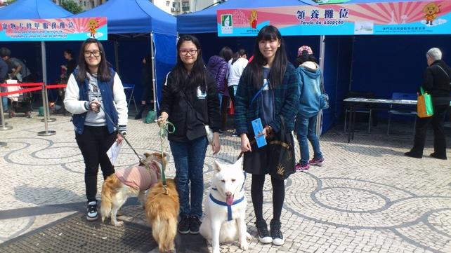 Taipa Dog Carnival-27-02-2016 (5)