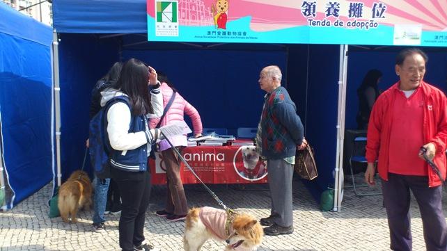 Taipa Dog Carnival-27-02-2016 (6)