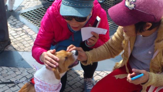 Taipa Dog Carnival-27-02-2016 (8)