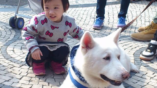 Taipa Dog Carnival-27-02-2016 (9)