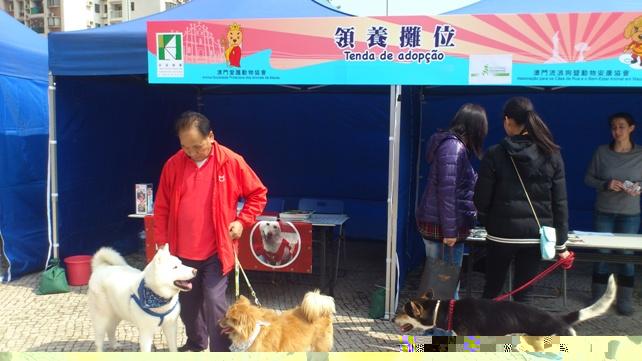 Taipa Dog Carnival-27-02-2016