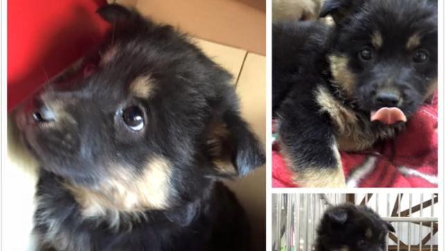 Kiwi (F) -Post for adoption