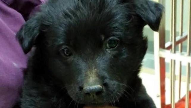 Papaya (M) -Post for adoption