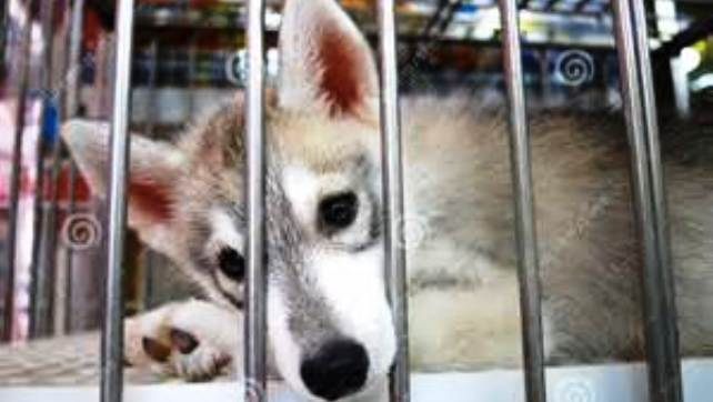 animal caged 3