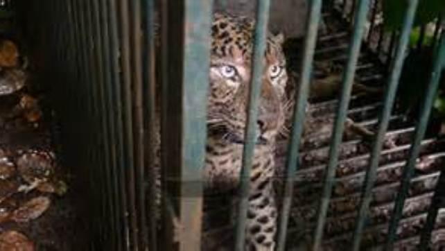 animal caged 5