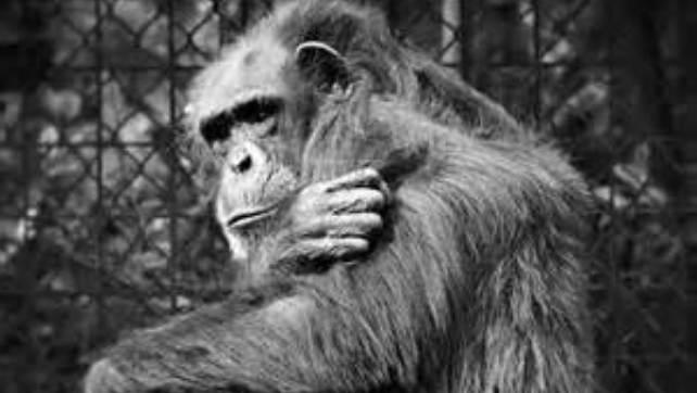 animal caged 7