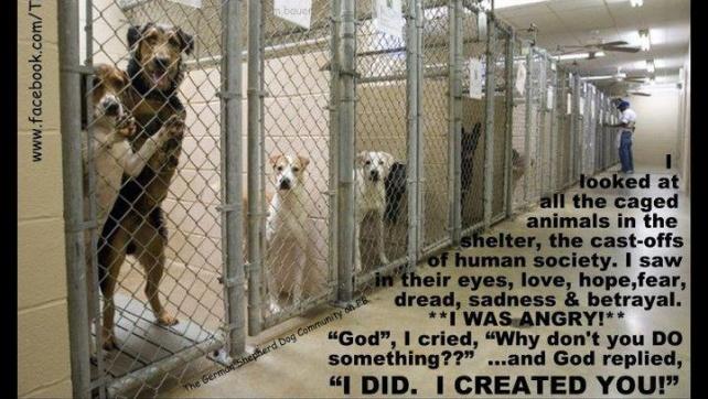 animal caged 8
