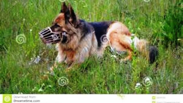 muzzled animal
