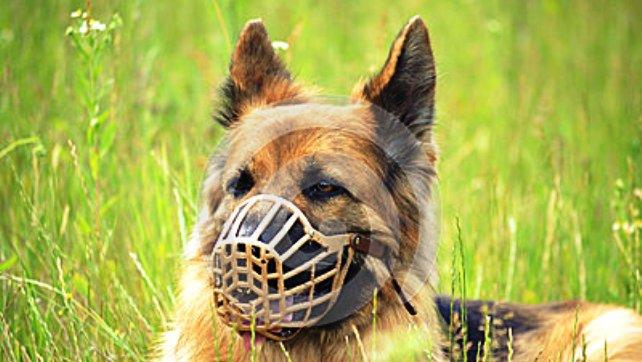 muzzled animal3