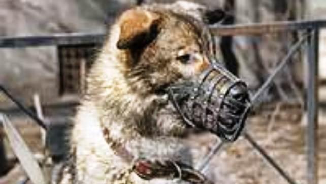 muzzled animal4