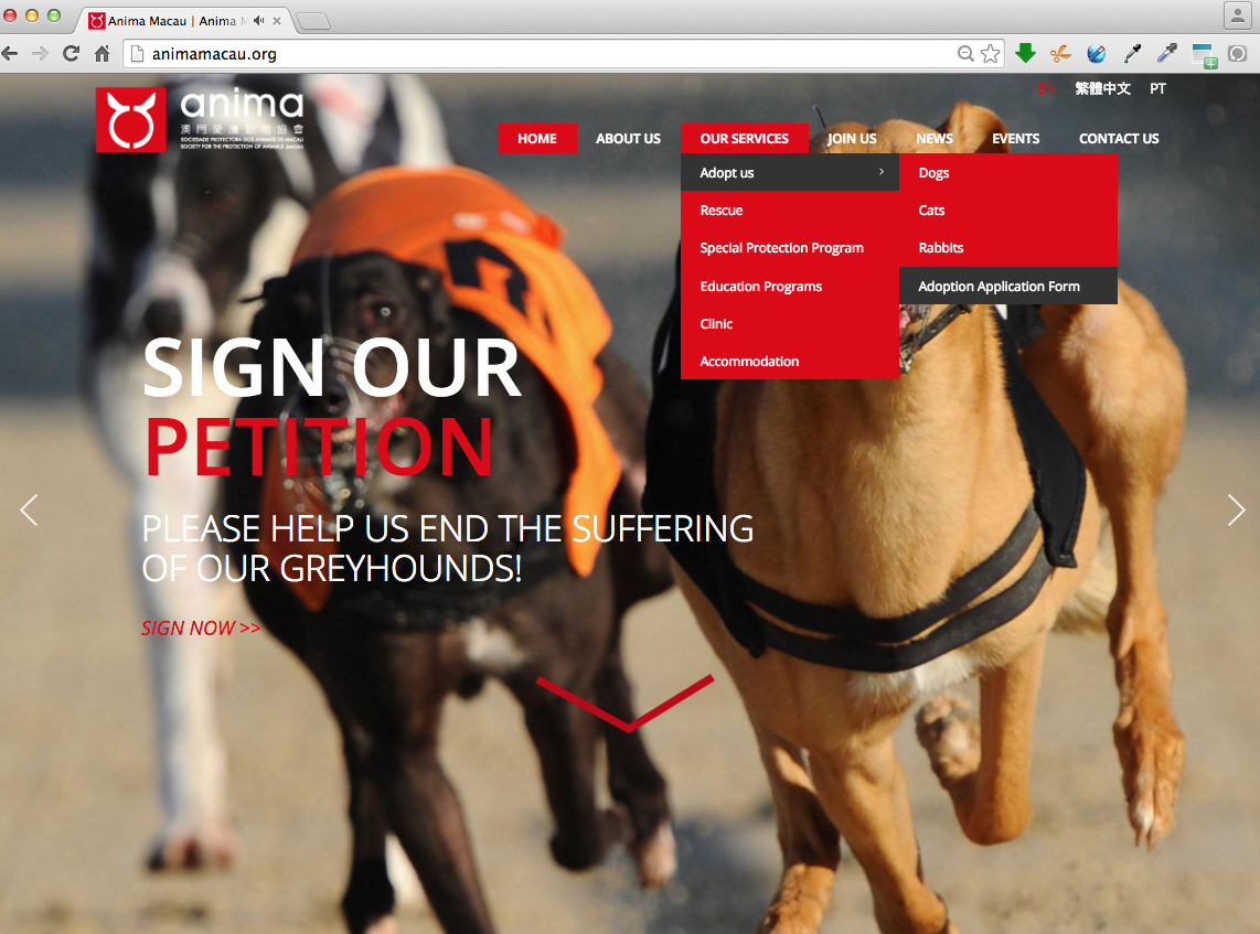 Adoption Greyhound at website 1