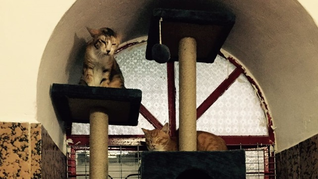 2016-11-26-cat-paradise-oc-10