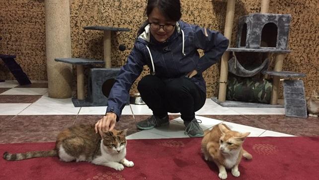 2016-11-26-cat-paradise-oc-11