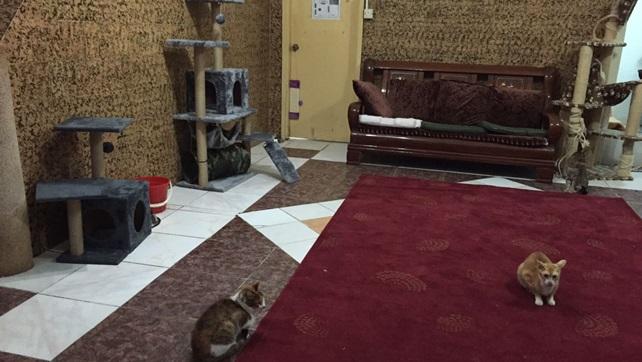 2016-11-26-cat-paradise-oc-9