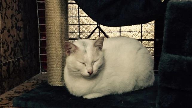 2016-11-26-cat-paradise-oc