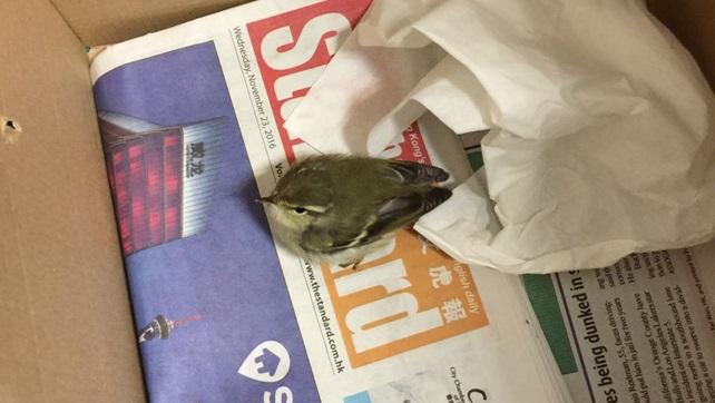 b057-birdie