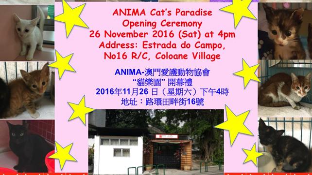 cat-paradise-oc-18-11-2016-4