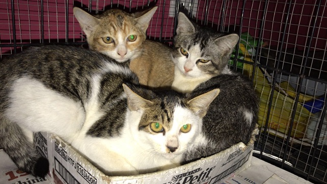 Barbara (F), Bobbie (F), Bess (M); 4 months old post on Facebook for adoption (2)